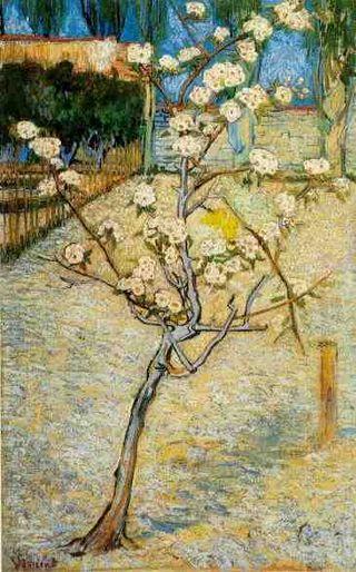 Van Gogh - Poirier en fleurs, 1888